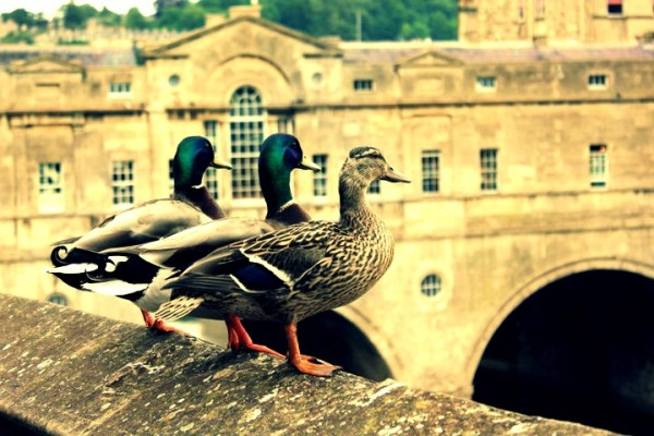 alice ducks pultney bridge bath in fashion