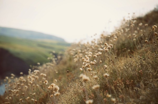 flowers_hill_wales