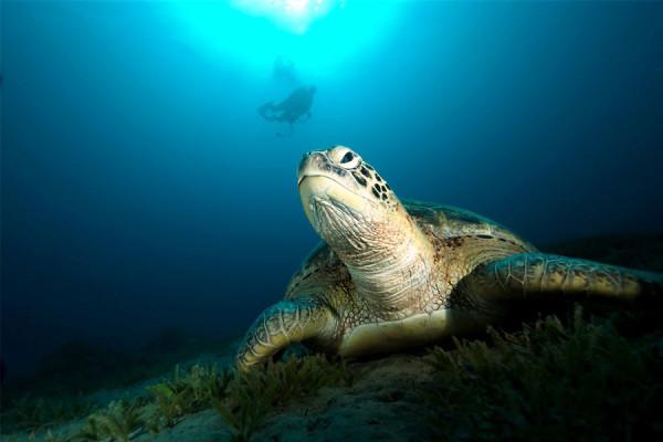 sea turtle sophie saint travelettes