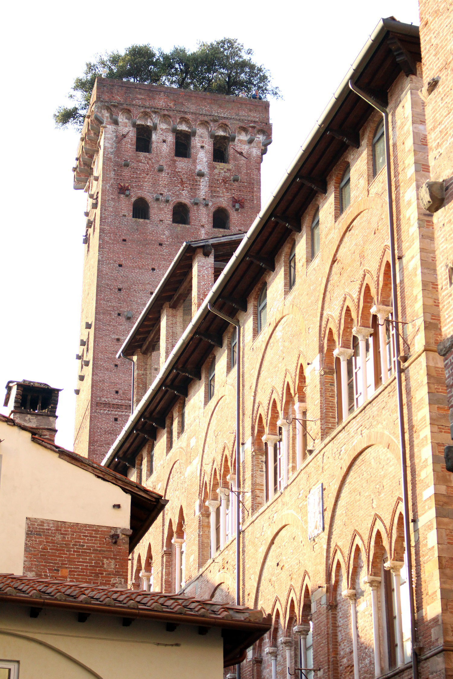 Torre Guingi in Lucca - Frances M Thompson