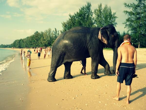 koh lanta elephant edit