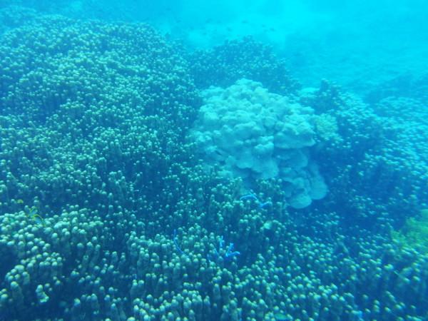 Hidden Paradise The Derawan Islands, Indonesia