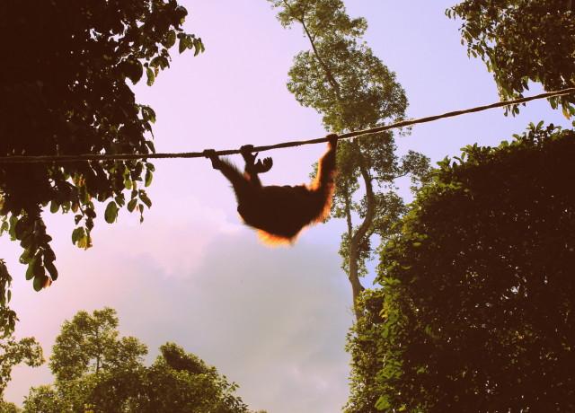10 reasons to explore Borneo, Malaysia Pt. 1