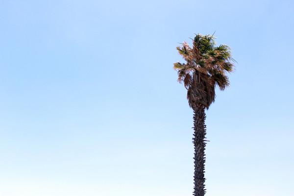 Palm Tree by Frankie Thompson