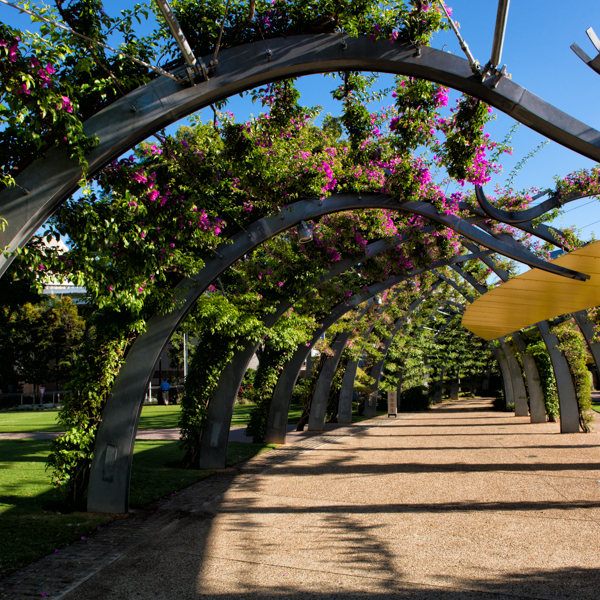 Travelettes Guide to Brisbane's Suburbs - South Bank Bouganvillea