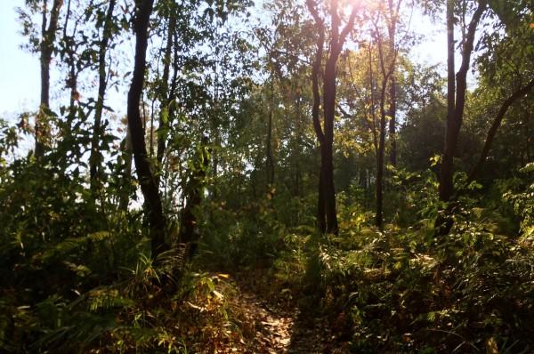 chiang mai_hill tribes_trekking_travelettes_annika ziehen_thailand - 08