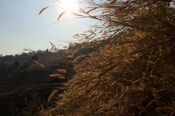 chiang mai_hill tribes_trekking_travelettes_annika ziehen_thailand - 09