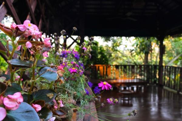 chiang mai_hill tribes_trekking_travelettes_annika ziehen_thailand - 27