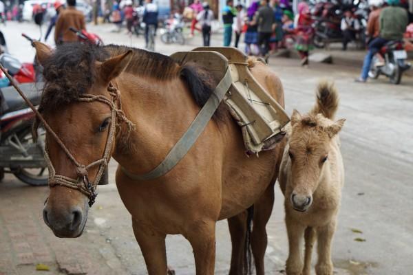 The Sunday market in Bac Ha, Vietnam - Liv Clarke 20