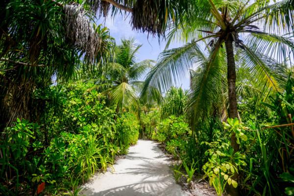 coco palm resort maldives