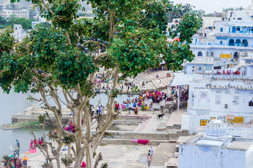 Reasons to put Pushkar on your India bucket list - Kathi Kamleitner - Travelettes 840 (12 of 24)
