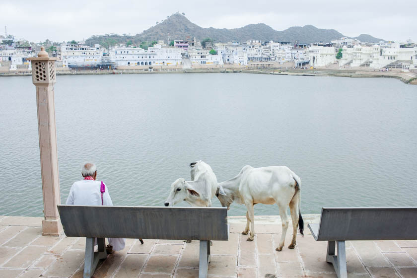 Reasons to put Pushkar on your India bucket list - Kathi Kamleitner - Travelettes 840 (7 of 24)