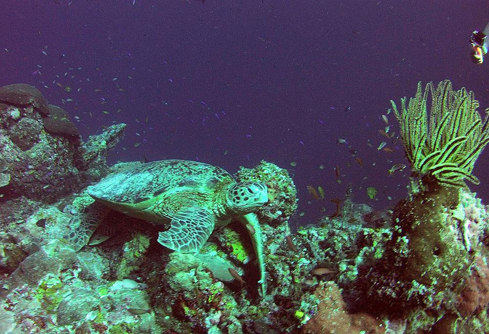 scubadiving-scubapro-travelettes20150730_0164