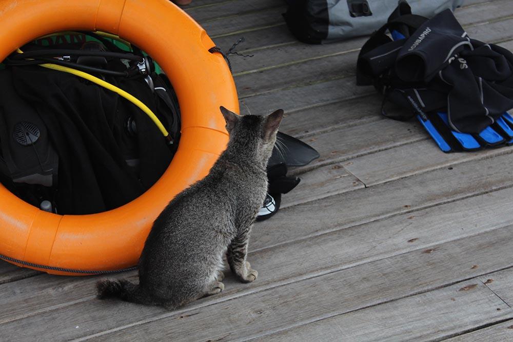 scubadiving-scubapro-travelettes20150804_0143