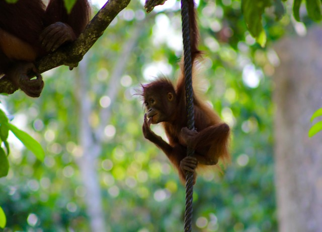Borneo - Where the Wild Things are