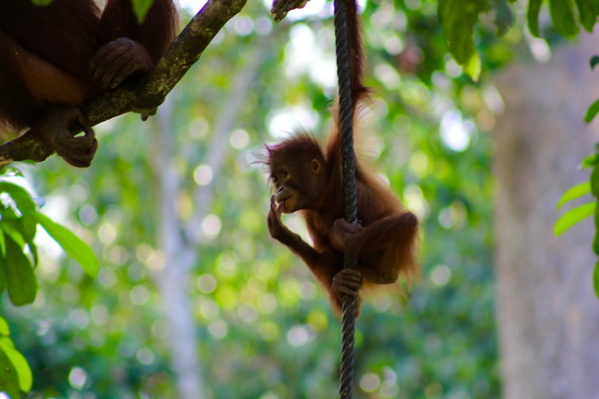 borneo-wildlife-intrepid-travelettes20150727_0291