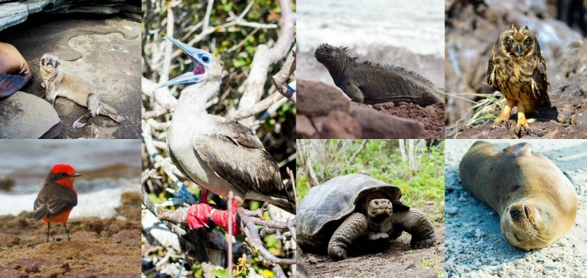 How to get the best out of the Galapagos Islands, Kathi Kamleitner, Travelettes