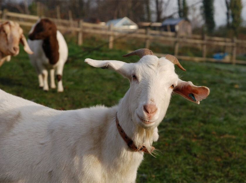st werburghs city farm bristol