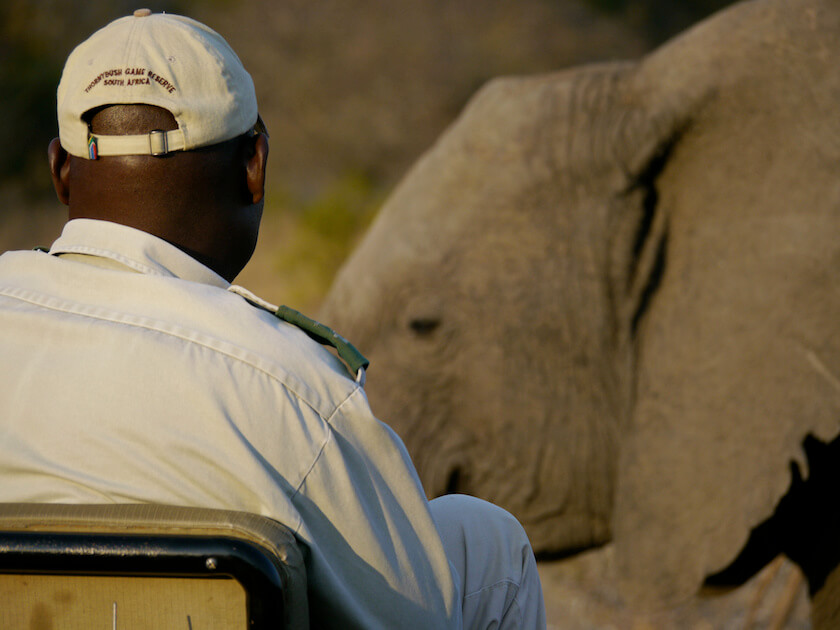 Can you get TOO close to nature? A South African Safari