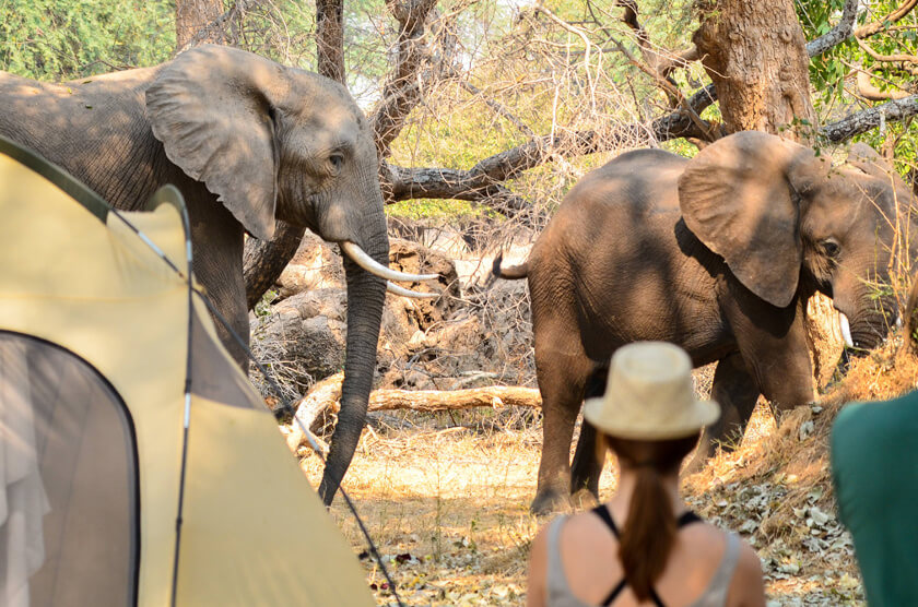 Camping with Elephants in Zimbabwe