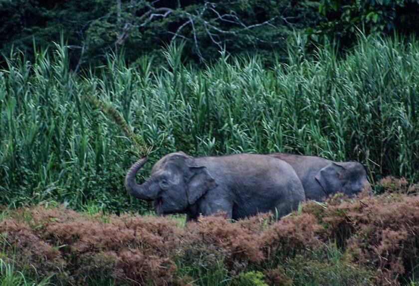 wildlife_travelettes_annikaziehen (11 of 13)