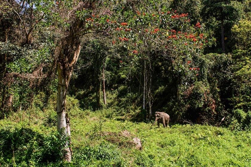 wildlife_travelettes_annikaziehen (4 of 13)