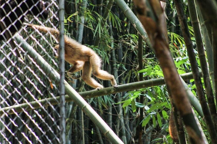 wildlife_travelettes_annikaziehen (8 of 13)