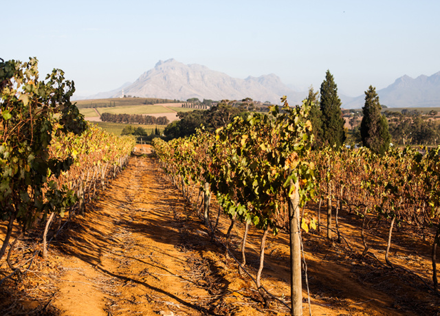 The Travelettes Guide to a weekend in Stellenbosch, South Africa
