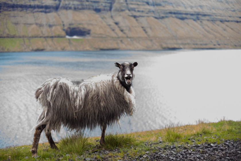 The Travlettes Guide is the only travel guide for the Faroe Islands you'll ever need - with info on accommodation, getting around, things to do & what to pack!