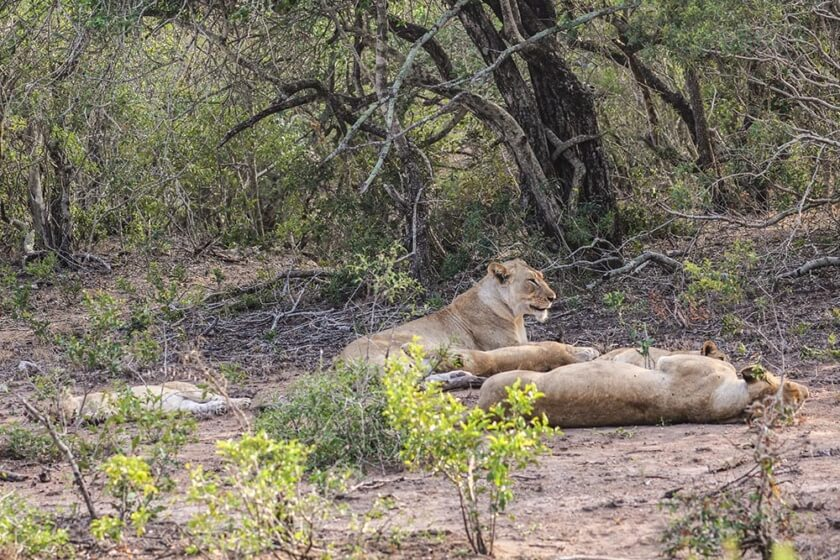southafrica_travelettes20160704_2150