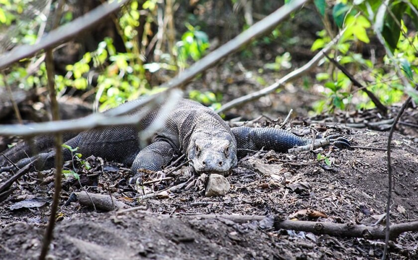 komodo_indonesia_travelettes20160823_2553