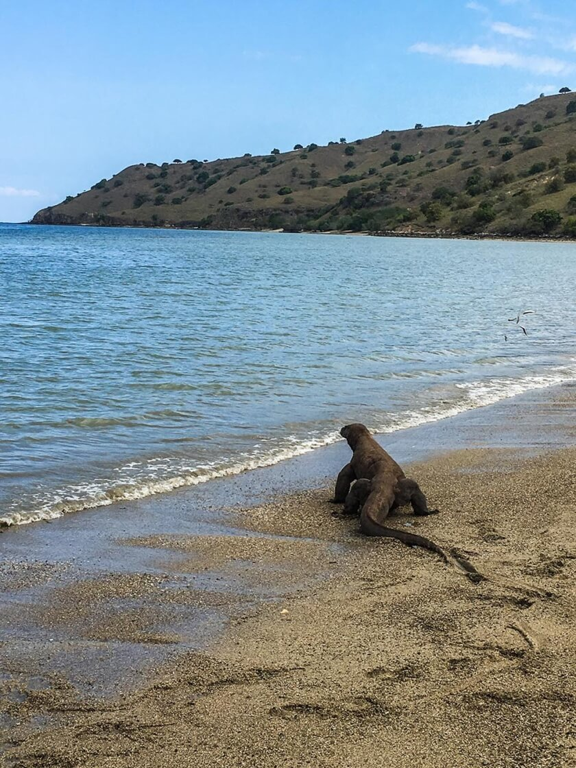 komodo_indonesia_travelettes20160823_2565