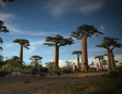 The Life-Changing Magic of Madagascar