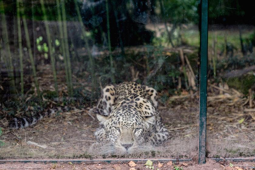 BrabantNacht Brabant Tilburg Netherlands Safaripark Beekse Bergen