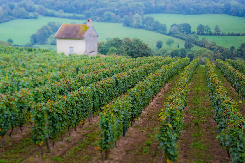 Burgundy Dijon France Mountains Hills Wine Hiking