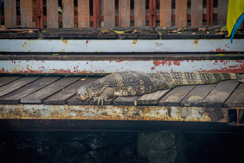 Monitor Lizard Khlong Canals Bangkok Boat Tour