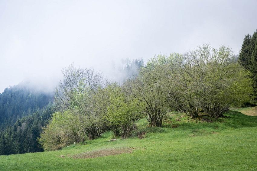 Pilgrimage Hiking Religion Spiritual Walk Austria Europe