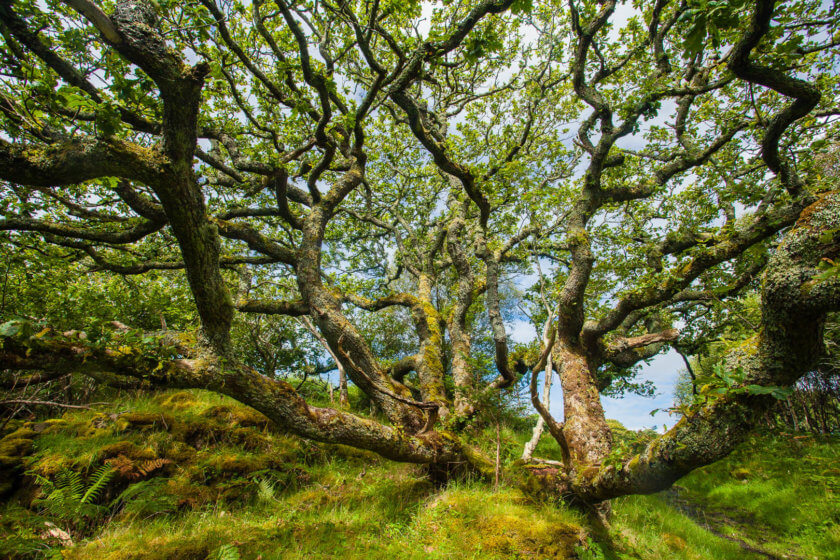 Enchanted forest on the Isle of Ulva in Scotland.