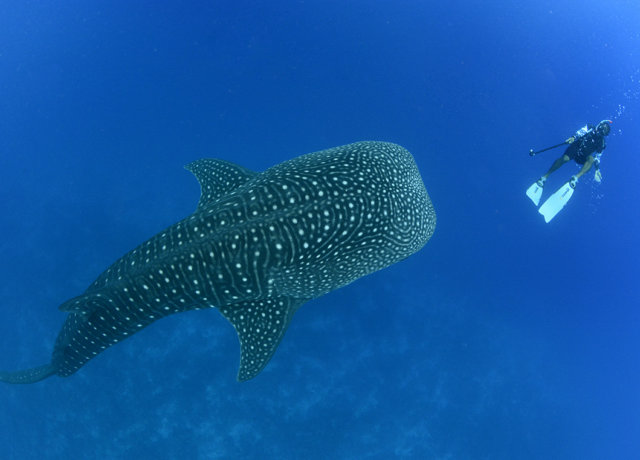 Underwater Adventures in the Maldives for Eco-Mermaids