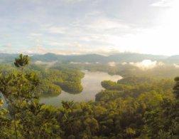 3 Ways You Can Help Stop Rainforest Deforestation