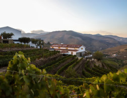 Picture Perfect Wine Country... in Portugal