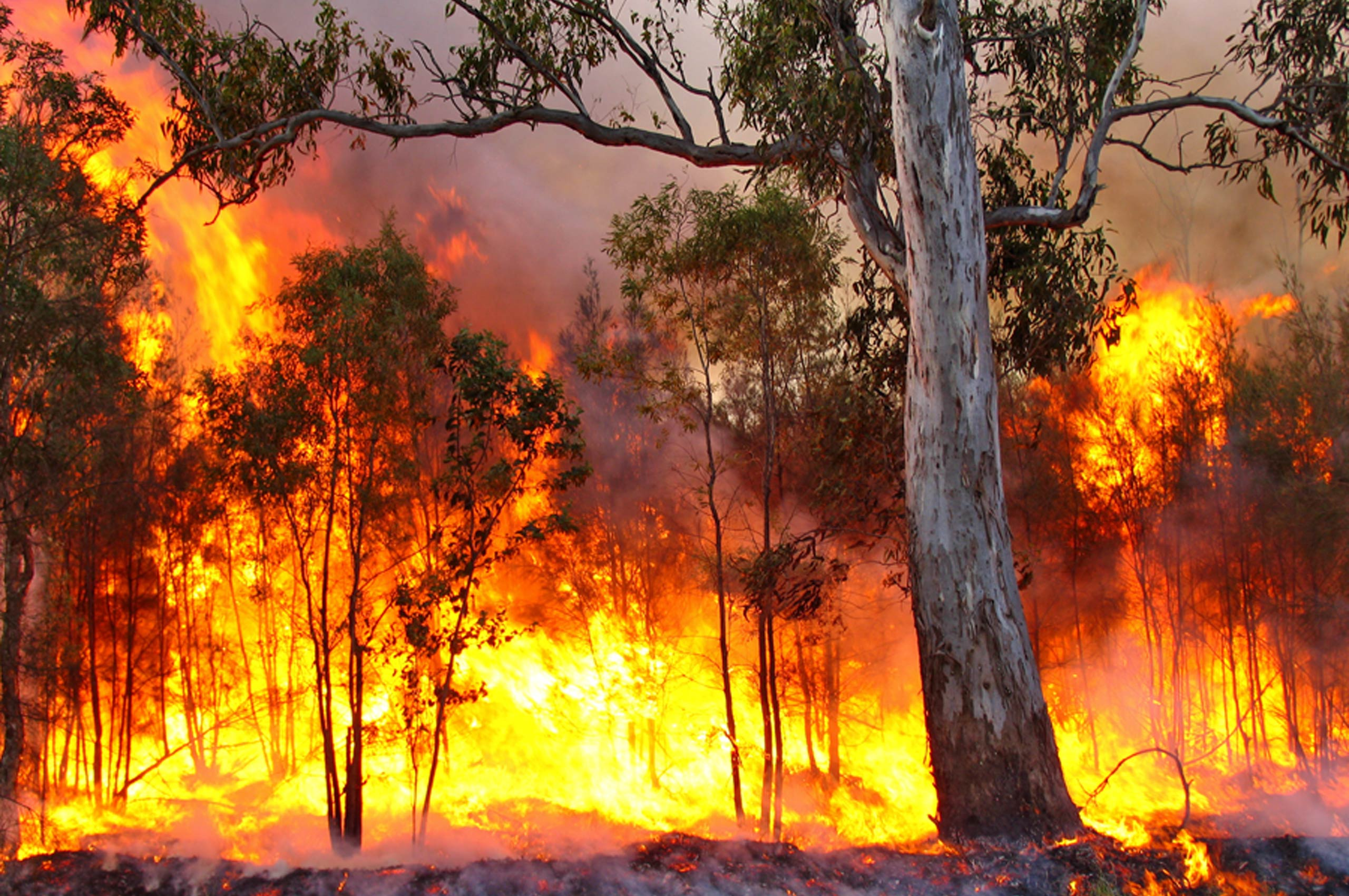 The Australian Bushfire and the current mood in Sydney and Melbourne
